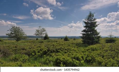 Plateau of Botrange (Belgium Ardennes)