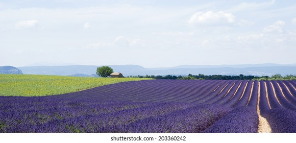 Plateau Valensole in Provence, South-eastern France