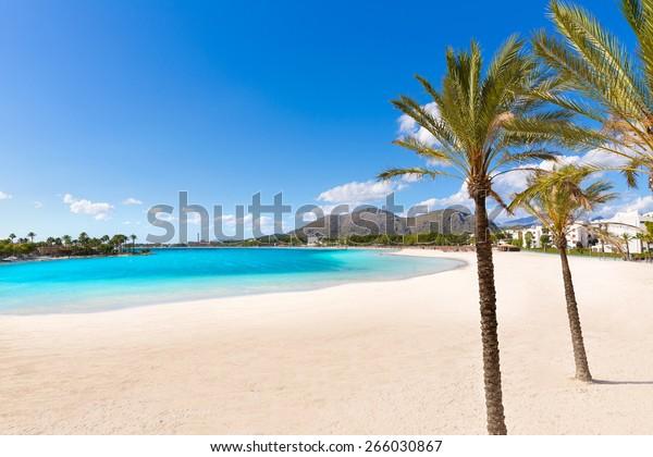 Palmen am Strand von Platja de Alcudia auf Mallorca Mallorca auf den Balearen