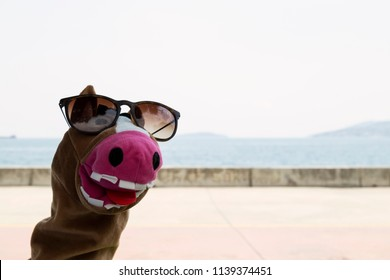 play with funny donkey puppet wearing glasses in the beach for preschool or nursery concept.Education activity time for children.