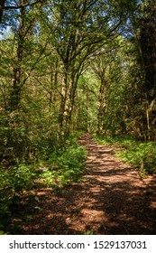 """Play of light and shadow at the """"Naturparkweg"""" (""""Nature Park Hiking Trail"""") in the """"Maerkische Schweiz"""" nature reserve near the town of Waldsieversdorf"""