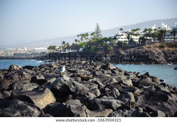 Playa de Las Americas view from the ocean shore