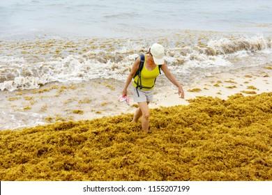 PLAYA DEL CARMEN, QUINTANA ROO/ MEXICO - 10/08/2018 Tourist walking on mexican beach full of sargassum algae