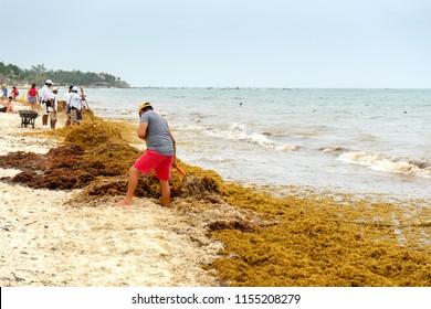 PLAYA DEL CARMEN, QUINTANA ROO/ MEXICO - 10/08/2018 people cleaning the beach full of sargassum algae