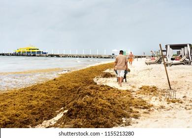 PLAYA DEL CARMEN, QUINTANA ROO/ MEXICO - 10/08/2018 people cleaning  mexican beach full of sargassum algae