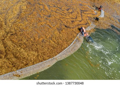 "PLAYA DEL CARMEN, QUINTANA ROO/ MEXICO - 04/30/2019. Worker's called ""Sargazeros"" cleaning the beach full of sargassum algae in the Riviera Maya."