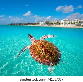 Playa del Carmen turtle photomount in Riviera Maya at Mayan Mexico
