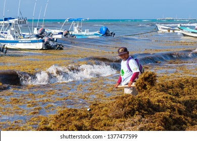 Sargassum Images, Stock Photos & Vectors | Shutterstock