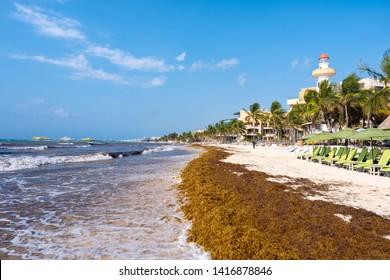 PLAYA DEL CARMEN,MEXICO - APRIL 19,2019 : The beach at Playa del Carmen invaded by Sargassum seaweed