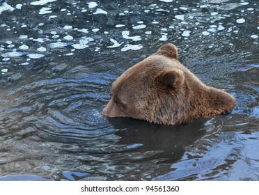 Playful bear doing water bubbles with his nose.