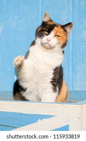 Playful calico cat with her paw in the air, with a blue barn background