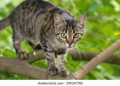 playful cat climbs a tree