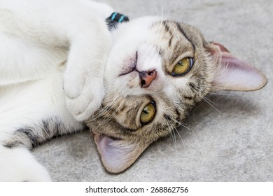 Playful cat laying on head