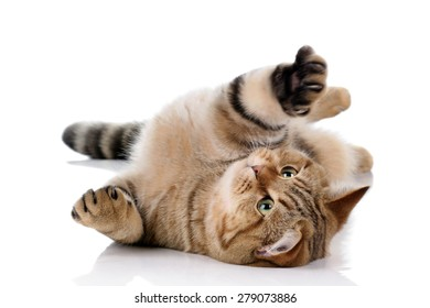 Playful cat lying on a white background