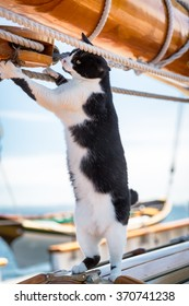 Playful cat on a sailboat at sea stands up on two feet to reach the ropes