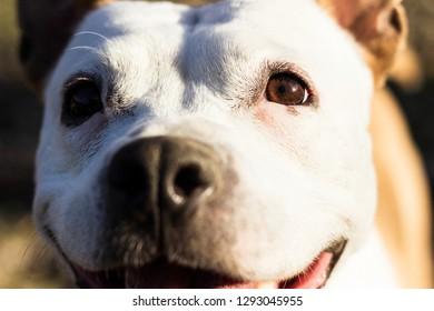 Playful dog face