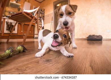 Playful dogs indoors at home