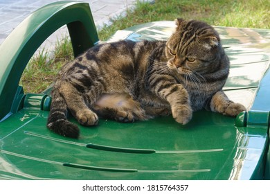 A playful domestic cat lies on a green plastic sun lounger with bent legs.