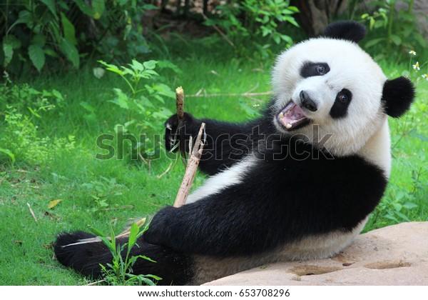 Un panda joyeux en Chine