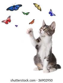 Playful Kitten Batting at Butterflies Flying Around