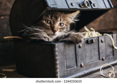 A playful kitten in the box. A little fluffy kitten in the box