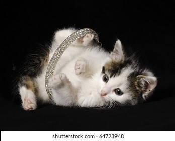 playful kitten tangled in a necklace
