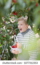 playful laughing boy picking cherries in the orchard holding basket full of berries, healthy eating and activity concept