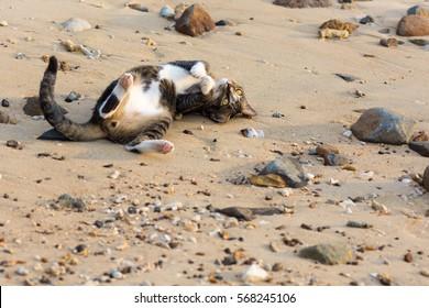 A playful pet cat playing on sandy beach.