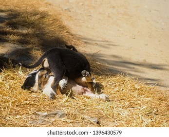 Playful puppies, young black white dogs playing on the ground by street on sunny day
