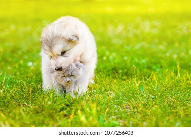 Playful puppy with kitten on summer green grass at sunset. Space for text