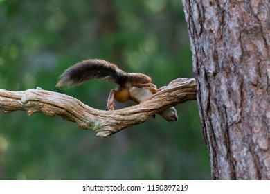 Playful squirrel action