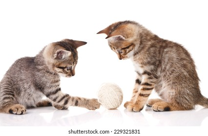 playful striped kitten with a ball on a white background