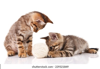 playful striped kittens with a ball on a white background