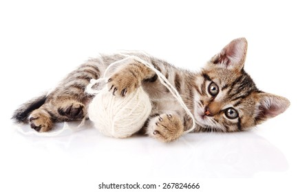 playful tabby kitten with white ball on white background