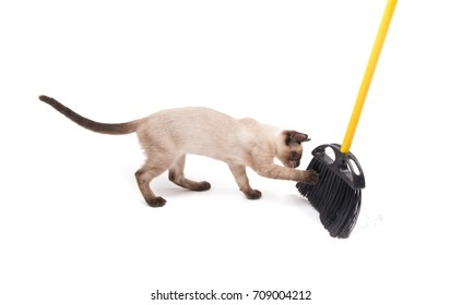 Playful young Siamese cat trying to catch a broom when floor is being swept, on white background