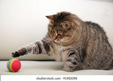 Playing cat