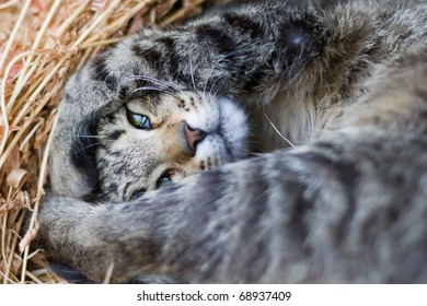 playing cat in the straw
