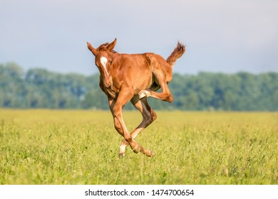 Thoroughbred Foal Images Stock Photos Vectors Shutterstock