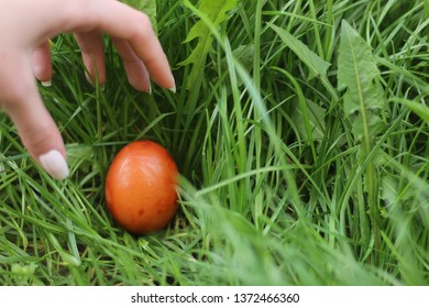 Playing egg hunt for easter holidays in Christian culture. Holiday season in spring and April. Gattering collored eggs in grass.