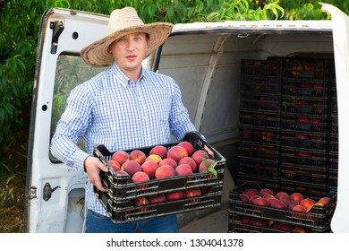 Pleasant smiling man  professional horticulturist packing crates  with tasty peaches to car