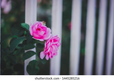 Please deliver the pink roses to people who download my pictures