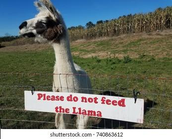 please do not feed llama sign with llama