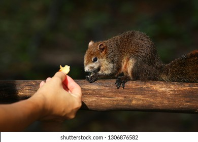 Please do not feed the squirrel, squirrel eating on timber