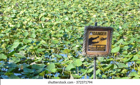 Please do not feed the wild alligator.