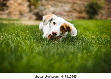 Pleased and happy dog eating meat on bone lying on green grass