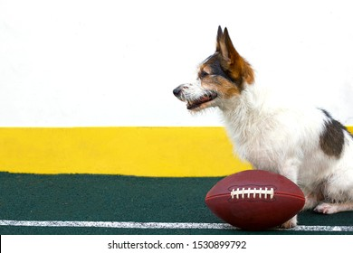 A pleased, happy Parson Terrier puppy is sitting on the playground. A happy dog smiles near a rugby ball. Jack Russell Terrier plays American football. Copy space