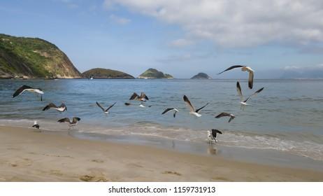 It is a pleasure to watch the free flight of the gulls Larus dominicanus, visiting the beach of Itaipu, in Niterói, Rio de Janeiro.