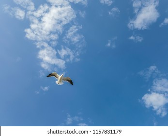 Pleasure to watch the solitary flight of the seagull, in blue sky and lit, on a bucolic walk, visiting Itaipu beach, in Niterói, Rio de Janeiro.