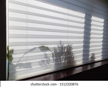 Pleated blinds XL Coulisse, white color, with 50mm fold closeup in the window opening. On the windowsill behind pleated shades, shadows of indoor plants shine through. Modern home curtains closed.