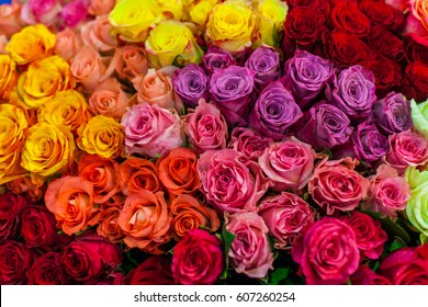Plenty of colorful bright roses close up